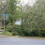 More fallen trees.