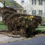 Massive tree roots.